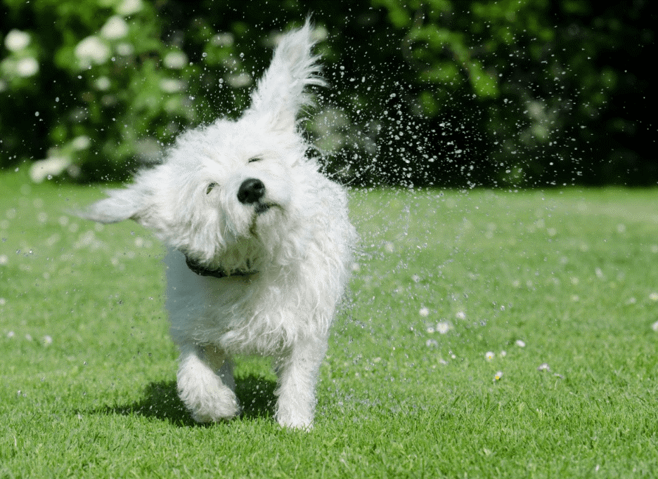 Pet Owners are Keeping Their Dogs Happy and Healthy