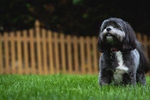 synthetic turf for backyard and dog